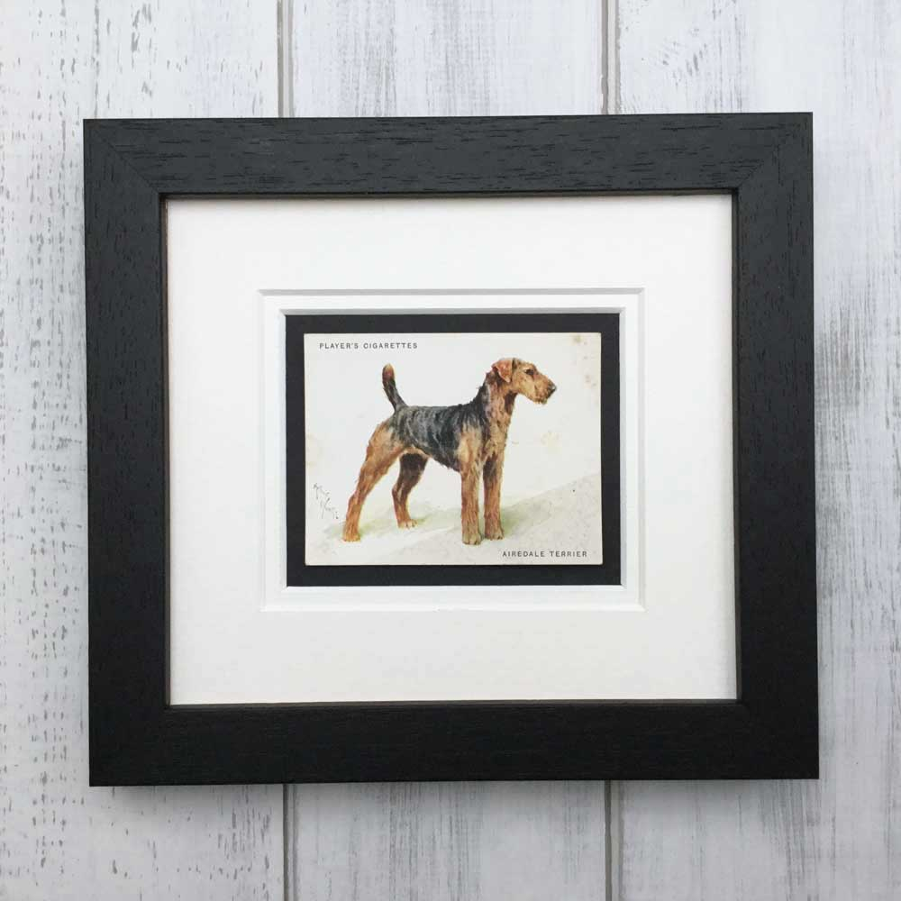 Vintage Gifts for Airedale Lovers - The Enlightened Hound
