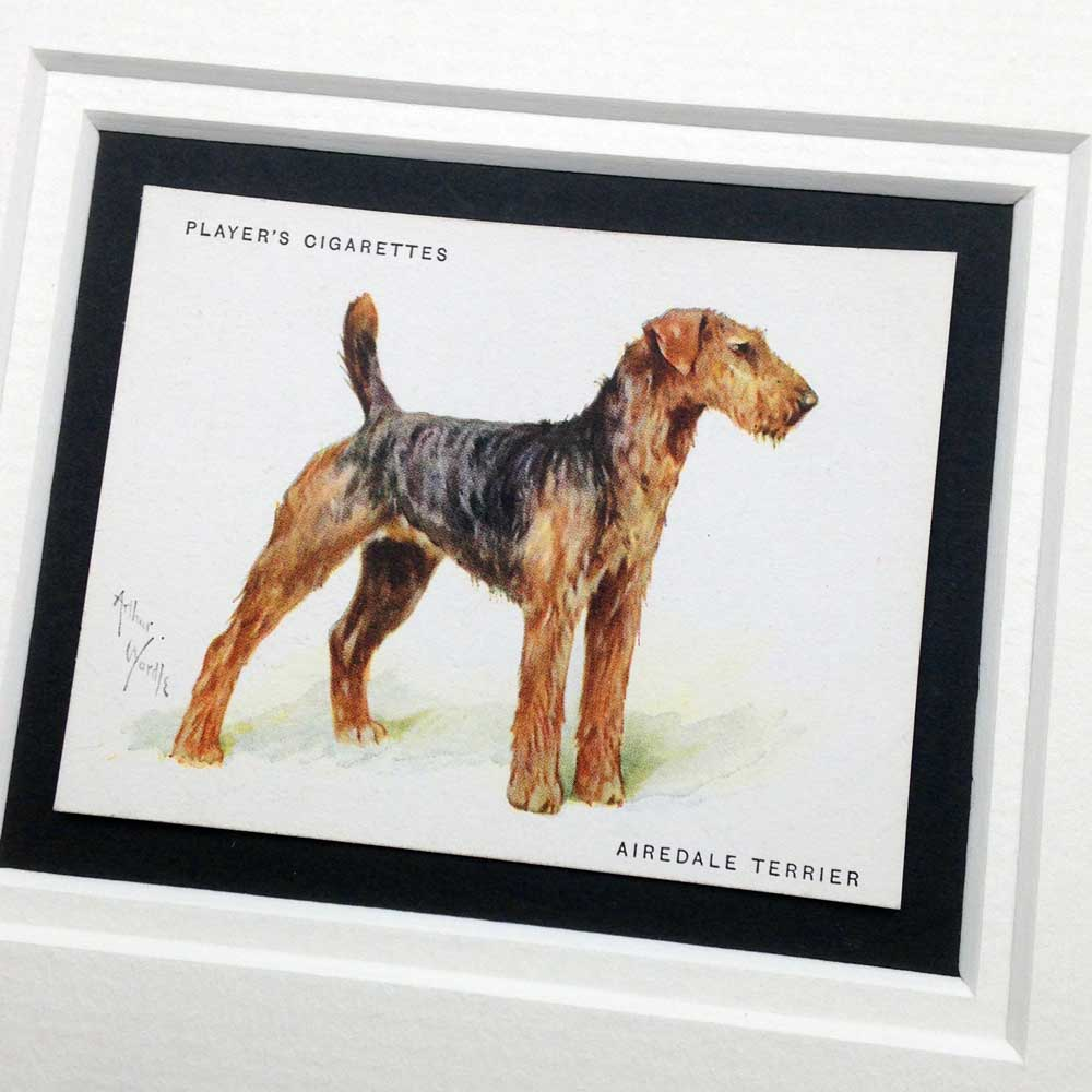 Airedale Vintage Gifts - The Enlightened Hound