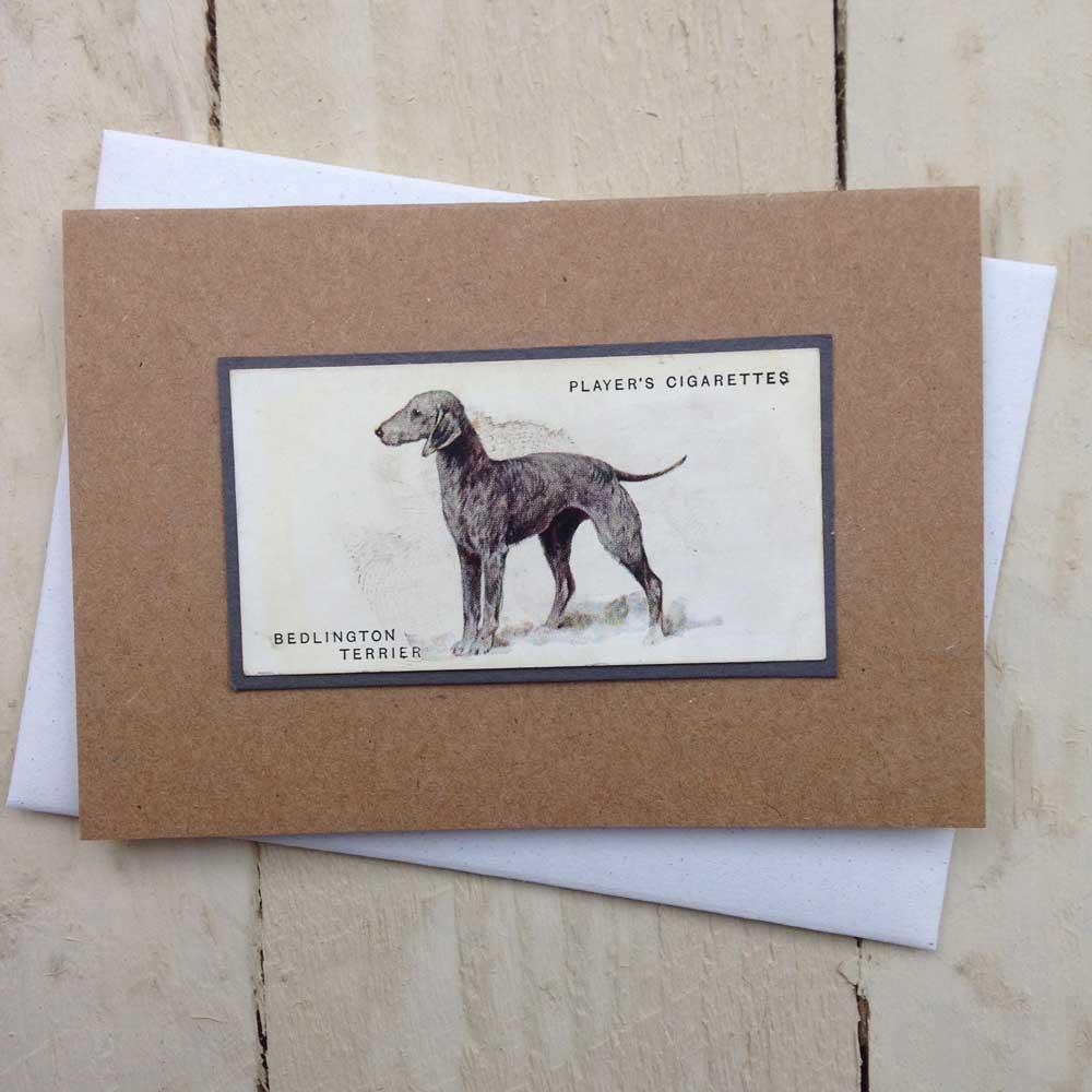 Bedlington Terrier card - The Enlightened Hound
