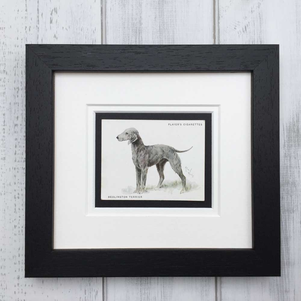 Vintage Gifts for Bedlington Terrier Lovers - The Enlightened Hound