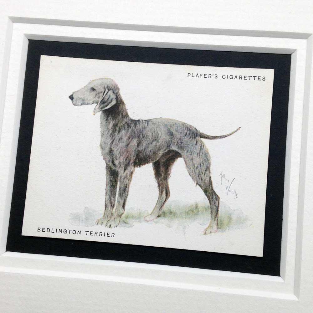 Bedlington Terrier Vintage Gifts - The Enlightened Hound