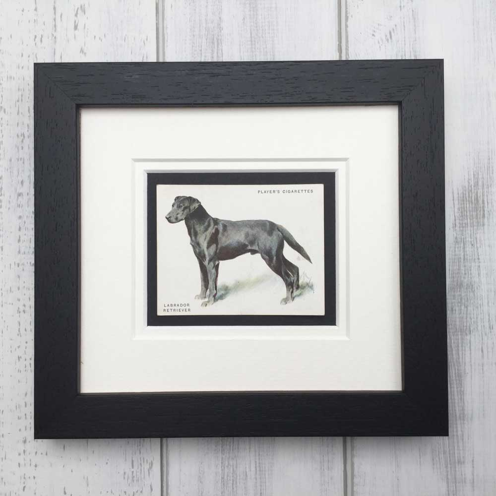 Vintage Gifts for black Labrador Lovers - The Enlightened Hound