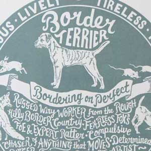 Border Terrier Print Detail by Debbie Kendall