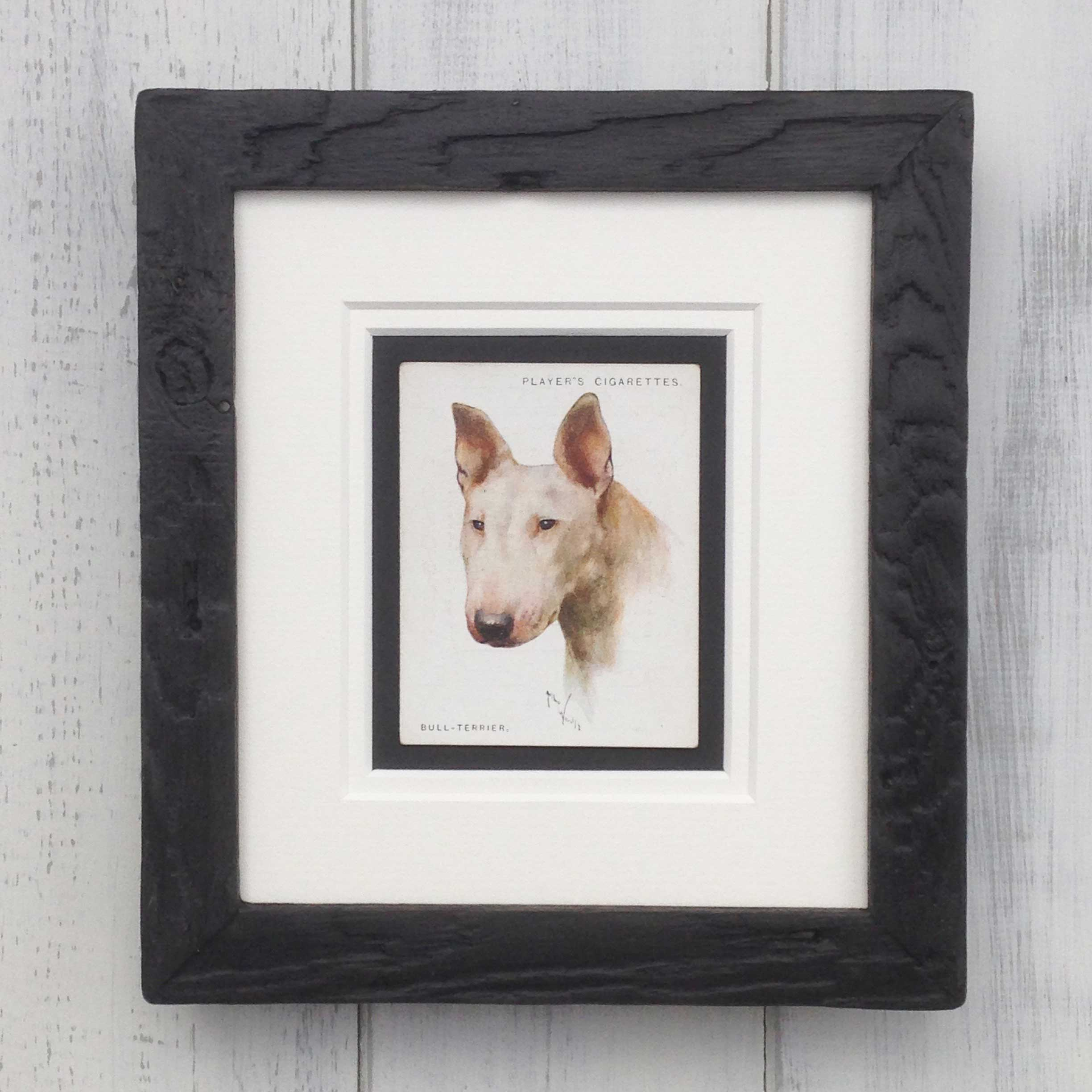 Vintage Gifts for Bull Terrier Lovers - The Enlightened Hound