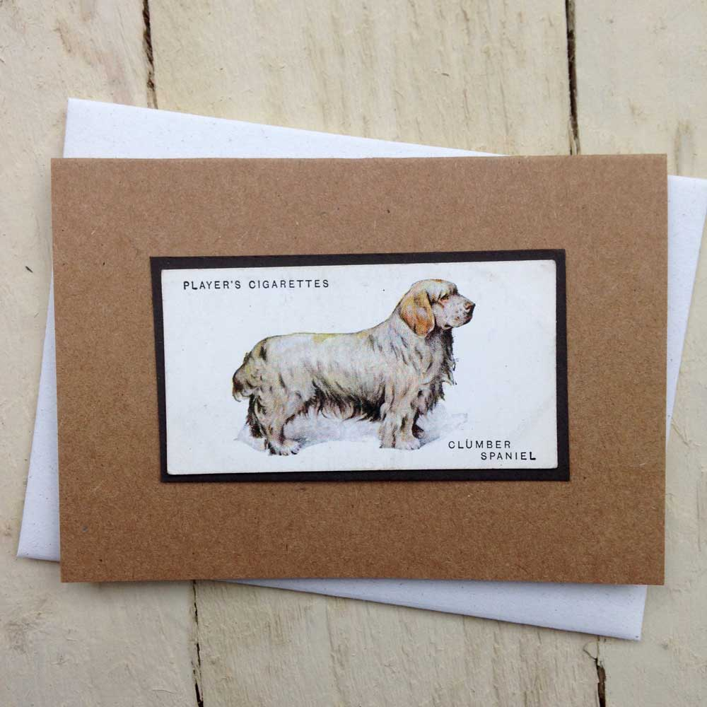 Clumber Spaniel card - The Enlightened Hound