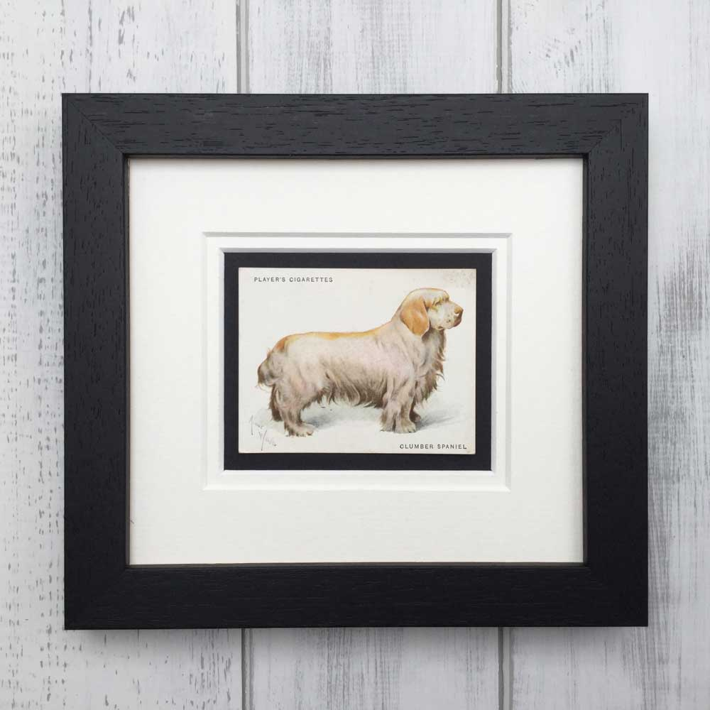 Vintage Gifts for Clumber Spaniel Lovers - The Enlightened Hound