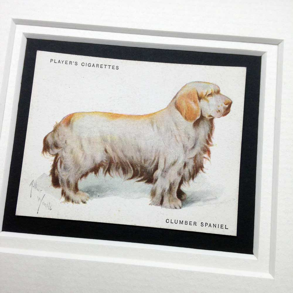 Clumber Spaniel Vintage Gifts - The Enlightened Hound