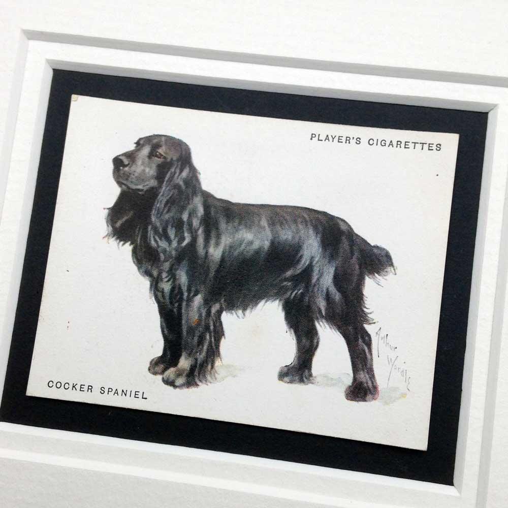 Cocker Spaniel Vintage Gifts - The Enlightened Hound