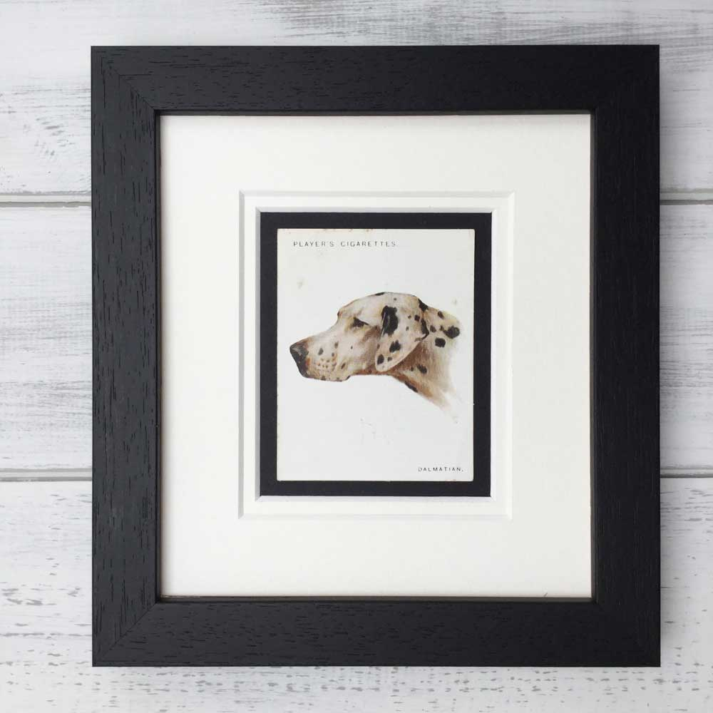 Vintage Gifts for Dalmatian Lovers - The Enlightened Hound