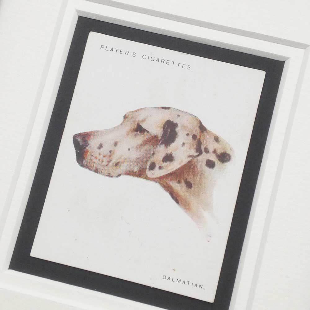 Dalmatian Vintage Gifts - The Enlightened Hound