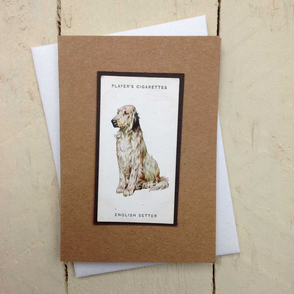 English Setter card - The Enlightened Hound