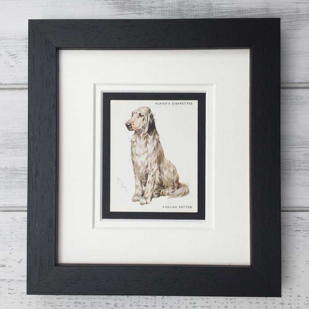 Vintage Gifts for English Setter Lovers - The Enlightened Hound