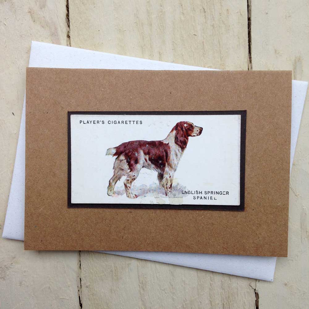 English Springer Spaniel card - the Enlightened Hound