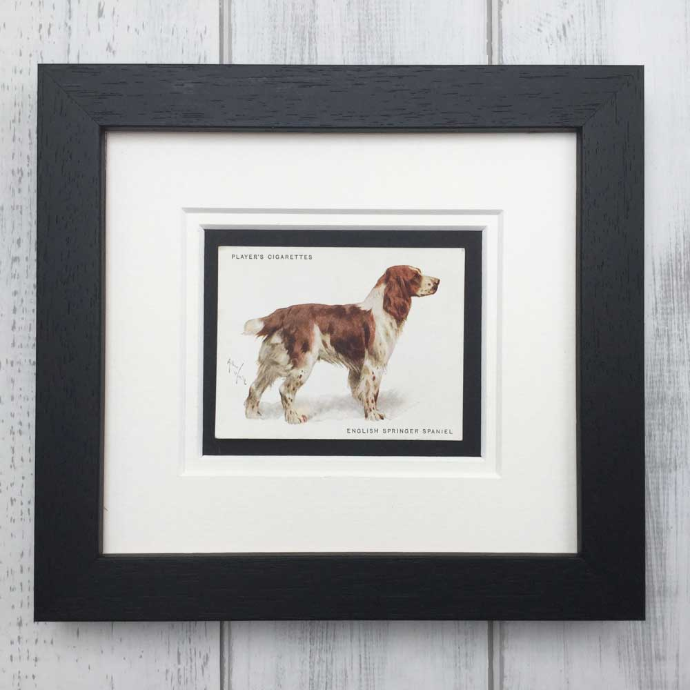 Vintage Gifts for English Springer Spaniel Lovers - The Enlightened Hound