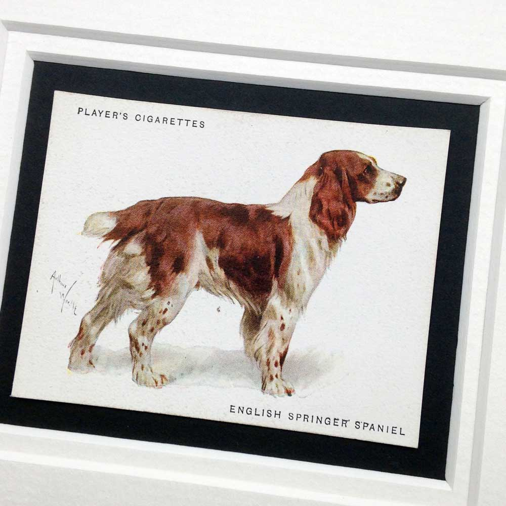 English Springer Spaniel Vintage Gifts - The Enlightened Hound