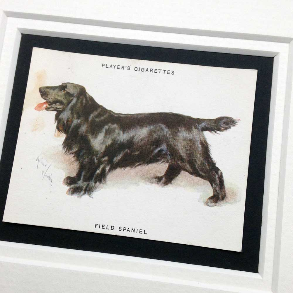 Field Spaniel Vintage Gifts - The Enlightened Hound