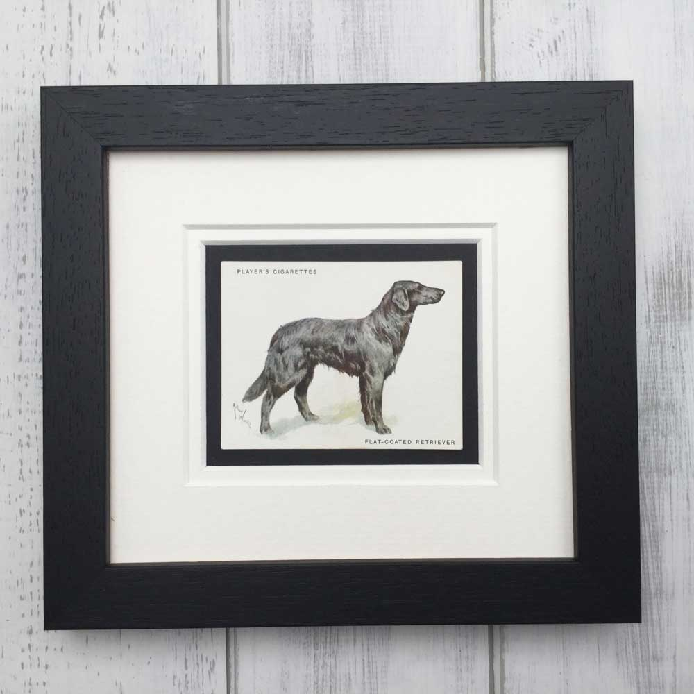 Vintage Gifts for Flat Coat Retriever Lovers - The Enlightened Hound