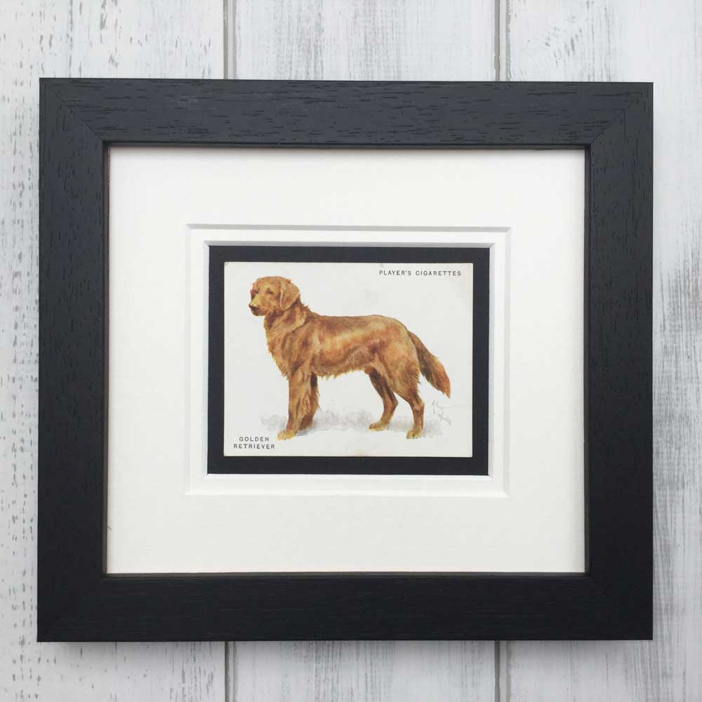 Vintage Gifts for Golden Retriever Lovers - The Enlightened Hound