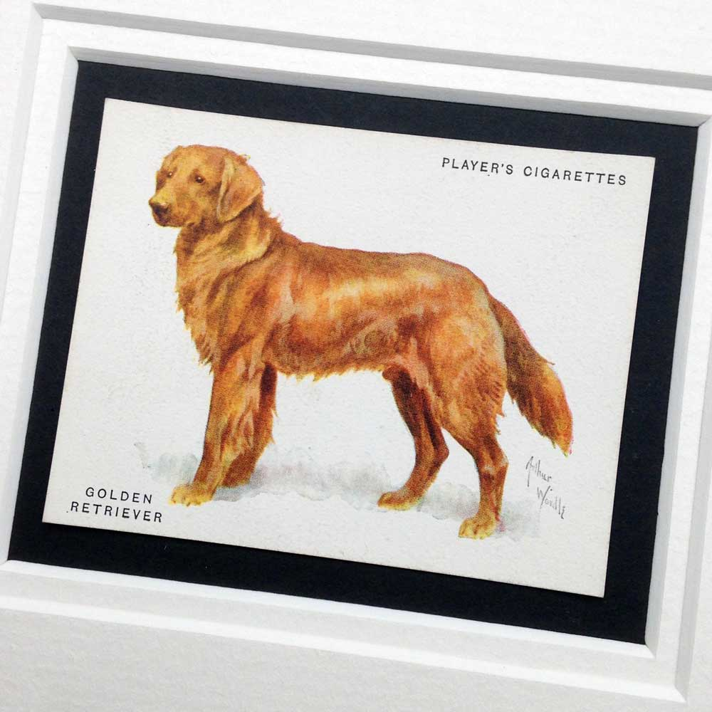 Golden Retriever Vintage Gifts - The Enlightened Hound