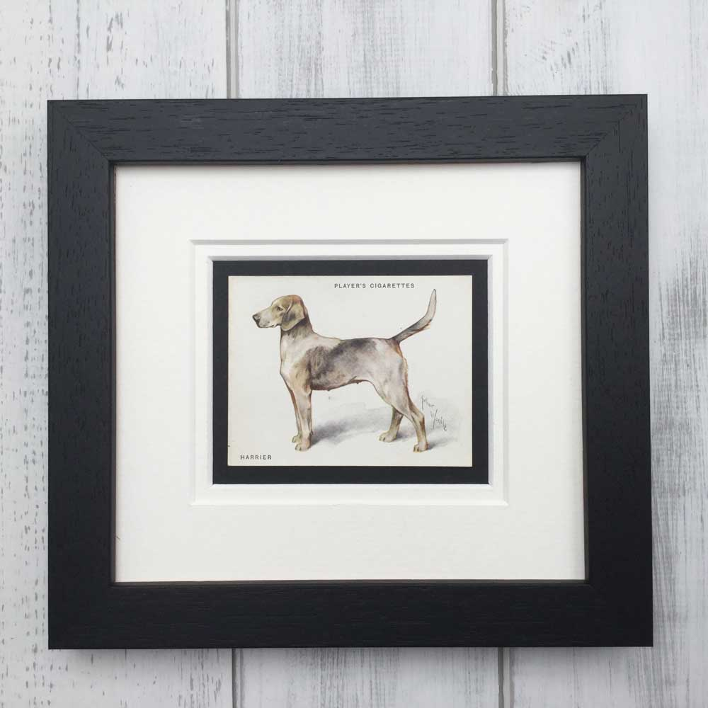 Vintage Gifts for Harrier Dog Lovers - The Enlightened Hound