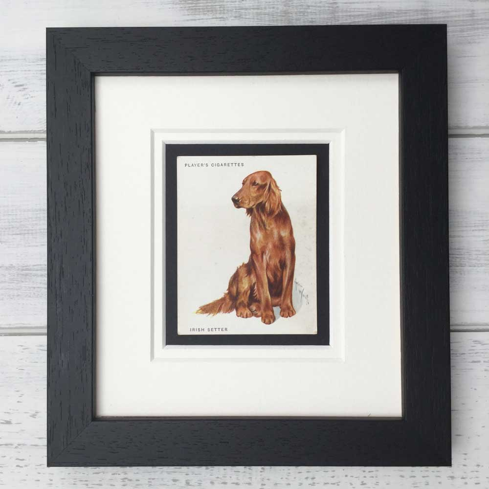 Vintage Gifts for Irish Red Setter Lovers - The Enlightened Hound