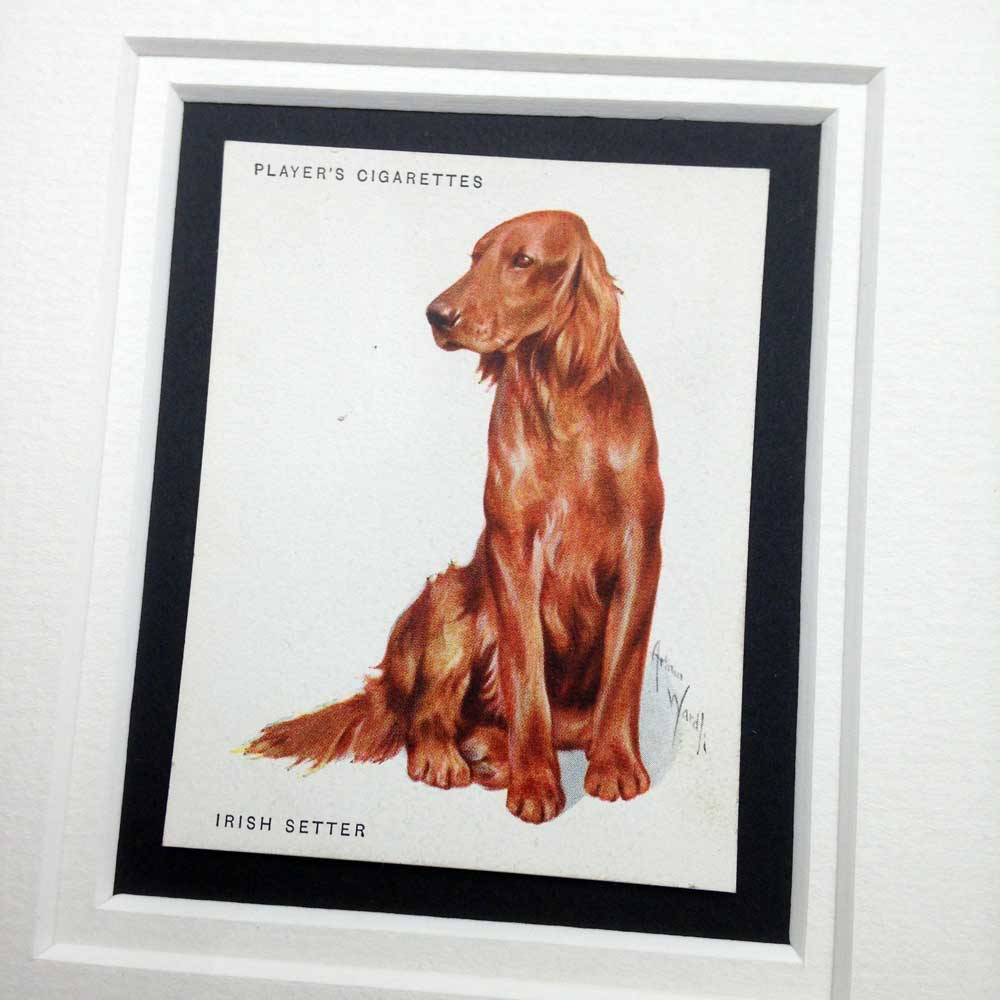 Irish Setter Vintage Gifts - The Enlightened Hound