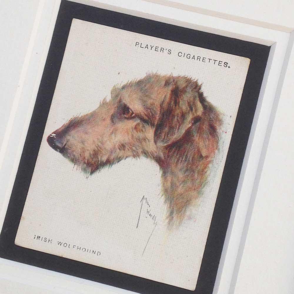 Irish Wolfhound Vintage Gifts - The Enlightened Hound