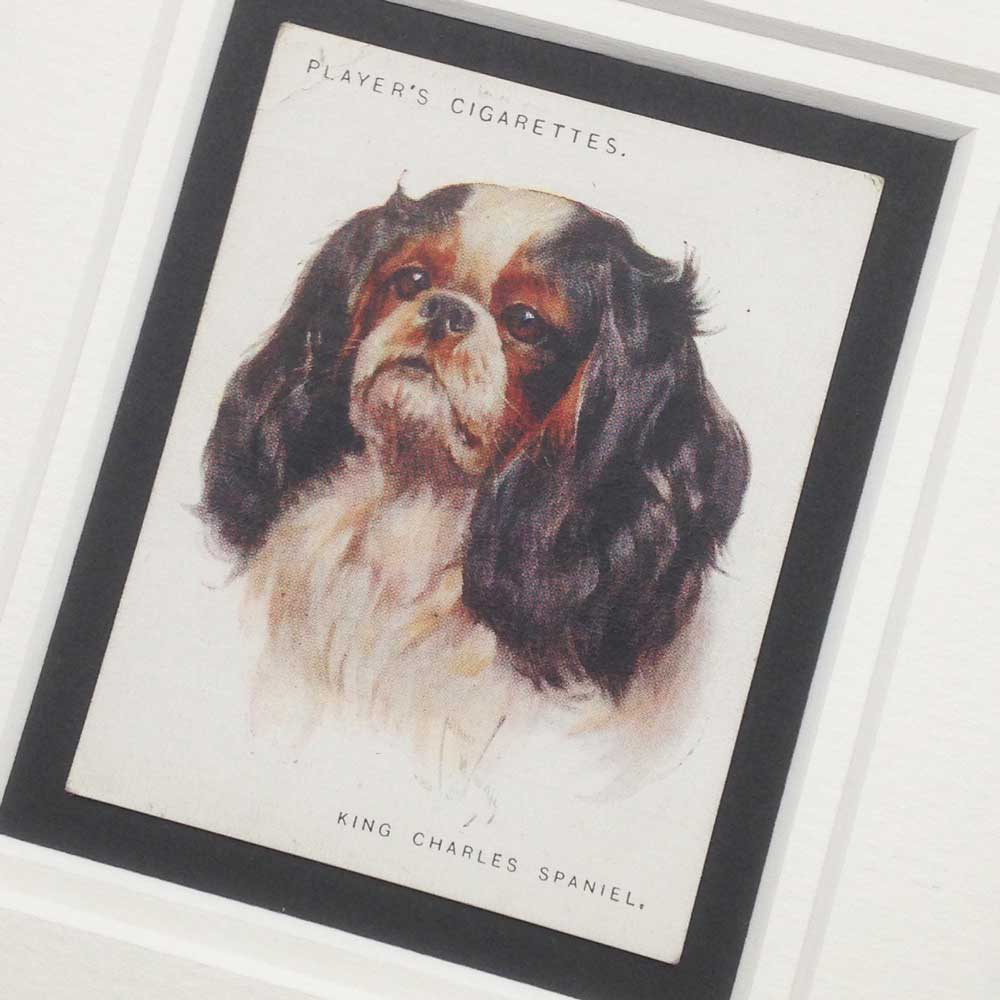King Charles Spaniel Vintage Gifts - The Enlightened Hound