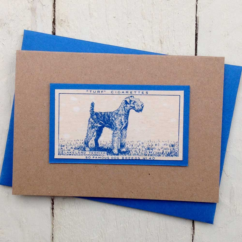 Lakeland Terrier greeting card - The Enlightened Hound