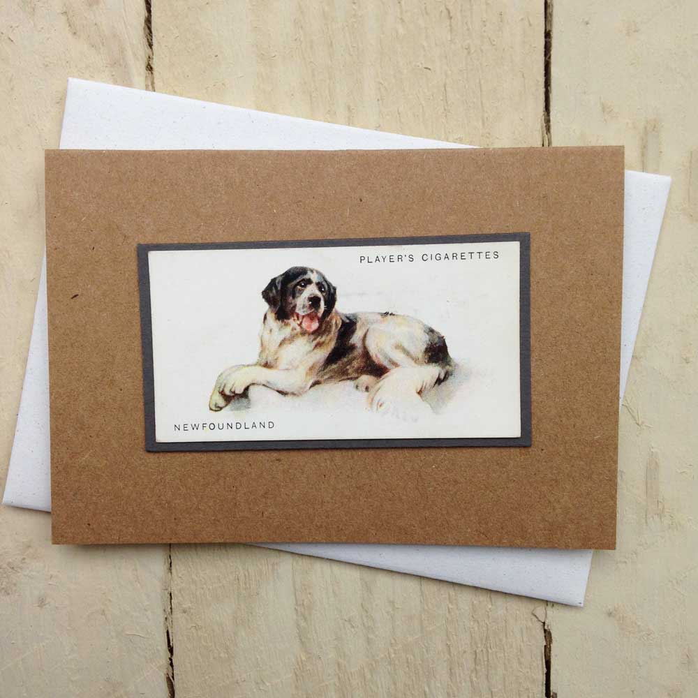 Newfoundland dog card - The Enlightened Hound
