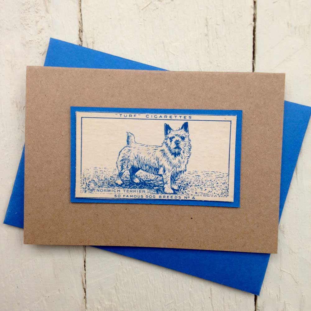 Norwich Terrier greeting card - The Enlightened Hound