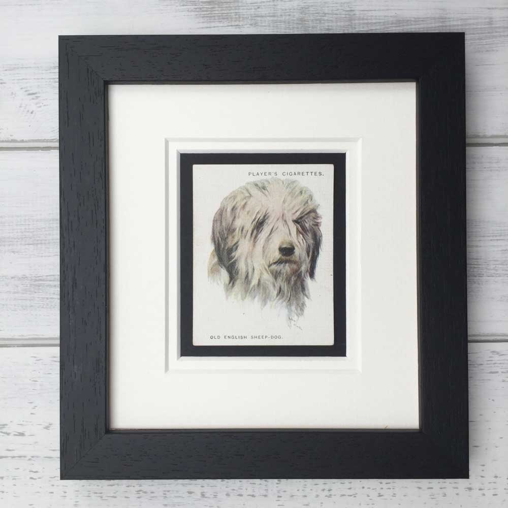 Vintage Gifts for Old English Sheepdog Lovers - The Enlightened Hound