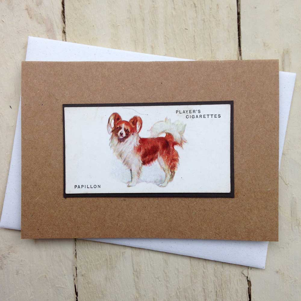 Papillon card - The Enlightened Hound