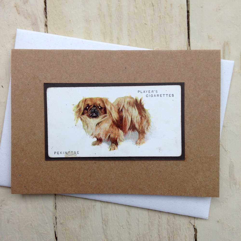 Pekingese card - The Enlightened Hound