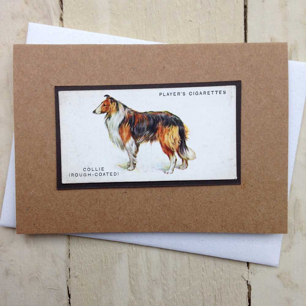 Rough Collie Greeting Card by The Enlightened Hound