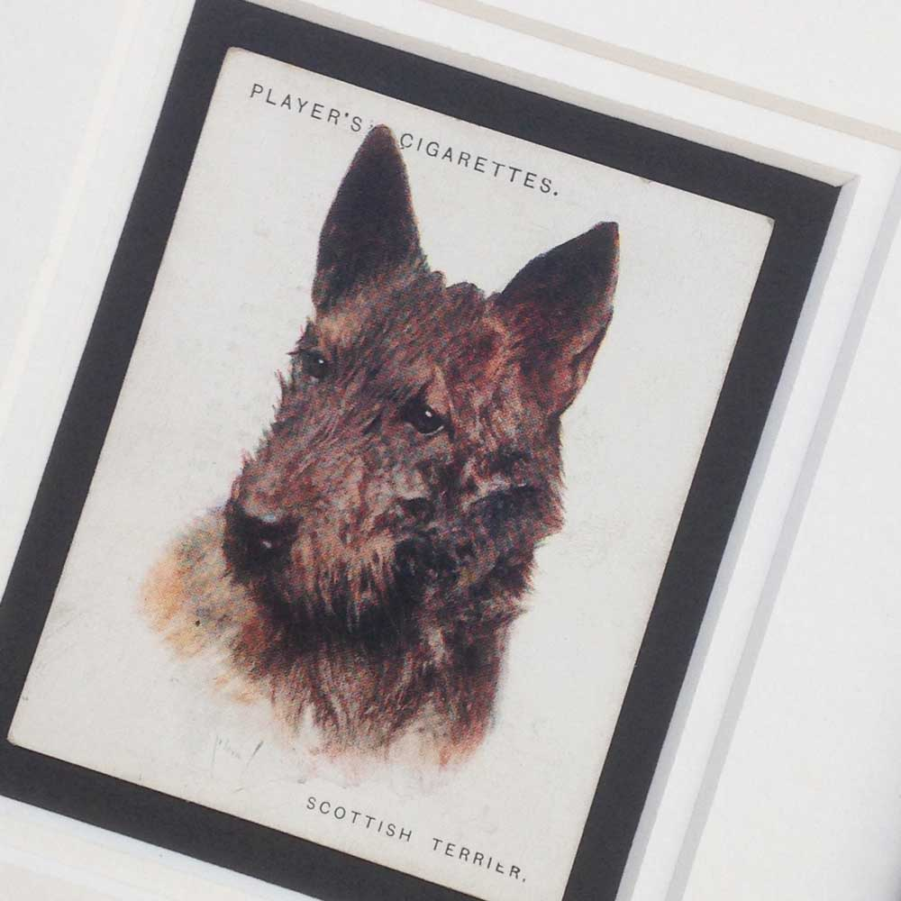 Scottish Terrier Vintage Gifts - The Enlightened Hound