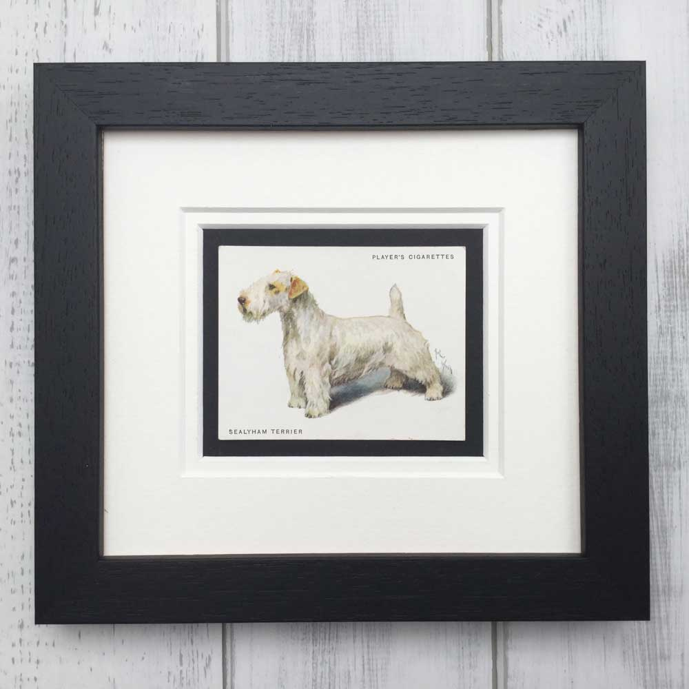 Vintage Gifts for Sealyham Terrier Lovers - The Enlightened Hound