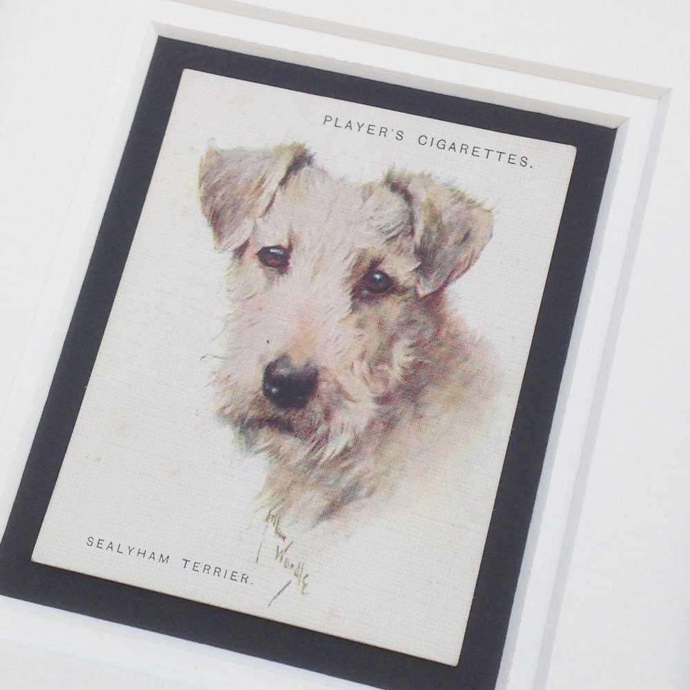 Sealyham Terrier Vintage Gifts - The Enlightened Hound