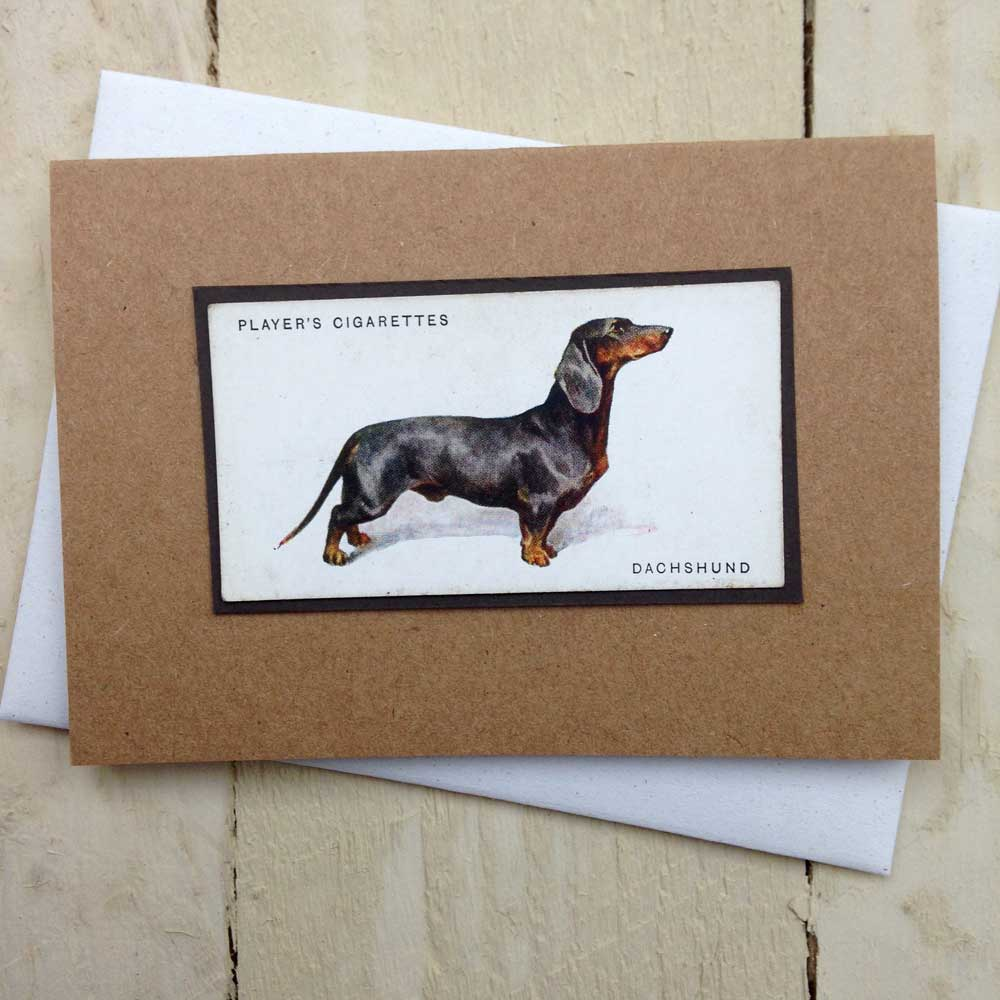 Smooth haired dachshund greeting card - The Enlightened Hound