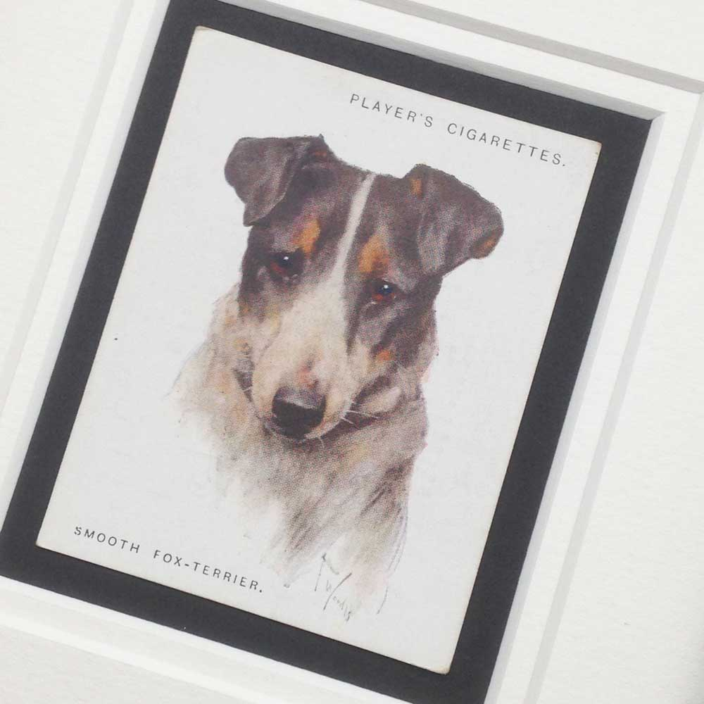 Smooth Fox Terrier Vintage Gifts - The Enlightened Hound