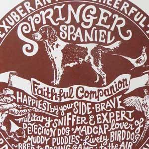 Springer Spaniel Print Detail by Debbie Kendall
