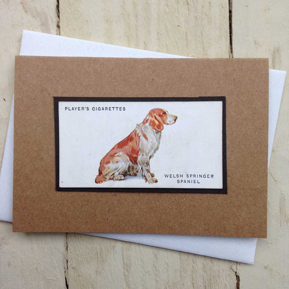 Welsh Springer Spaniel card - the Enlightened Hound