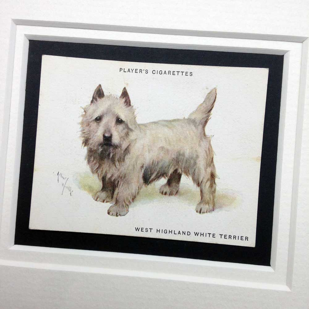 West Highland white terrier Vintage Gifts - The Enlightened Hound