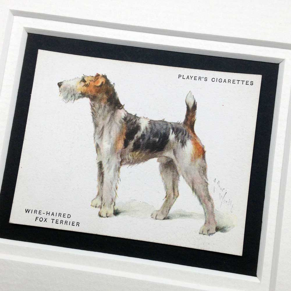 Framed vintage gifts for dog lovers - The Enlightened Hound
