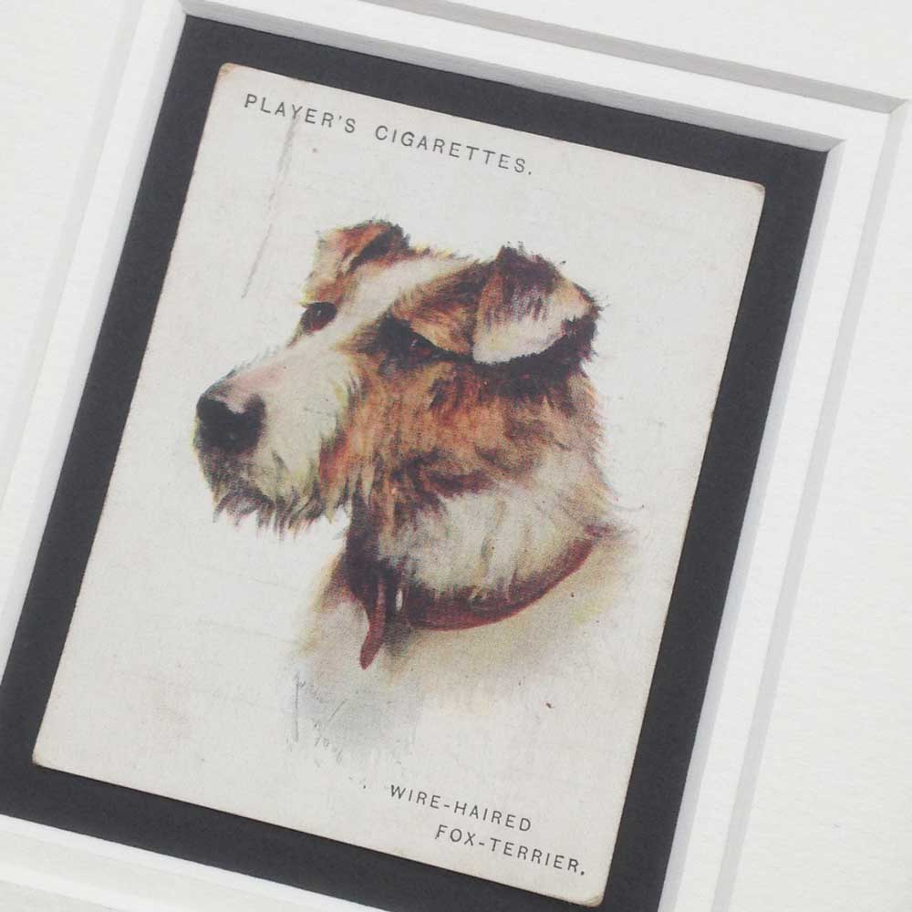 Wire Fox Terrier Vintage Gifts - The Enlightened Hound